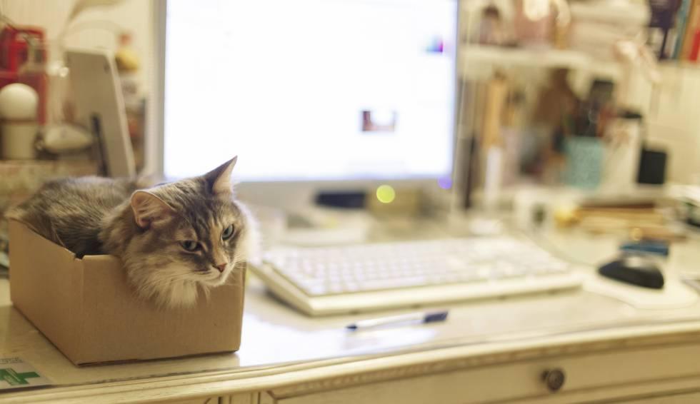 Computación cuántica, o un ordenador lleno de gatos (de Schrödinger)