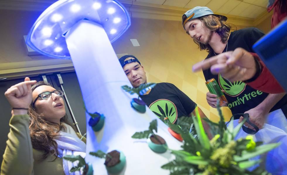 'Big data' e inteligencia artificial para articular la industria del cannabis