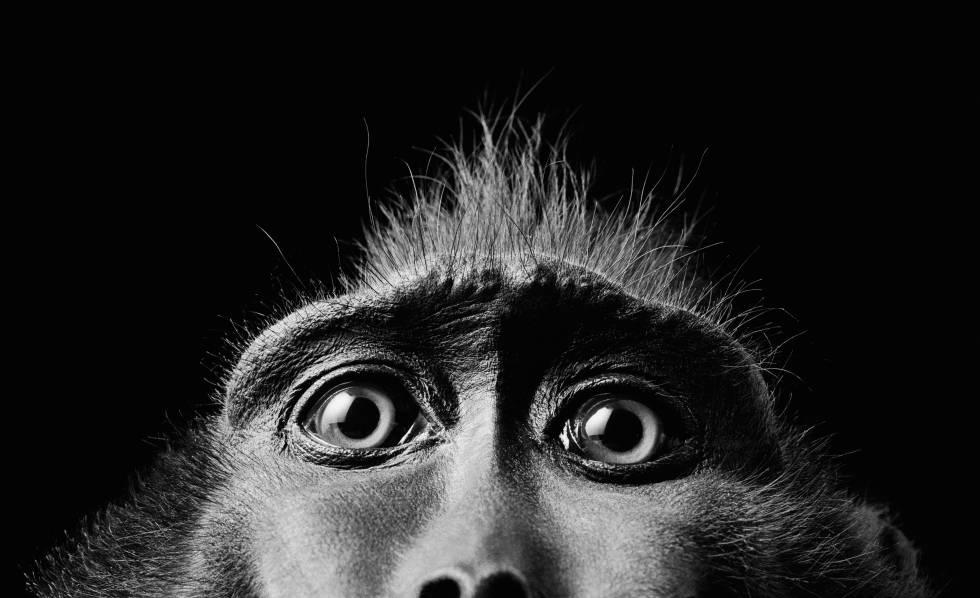 Debemos estudiar la inteligencia artificial igual que investigamos a animales salvajes