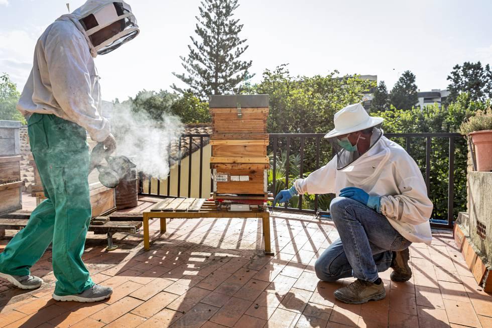 Un sensor colocado en la base de la colmena mide las variaciones de peso. Esos datos sirven, por ejemplo, para calcular la producción diaria de miel.