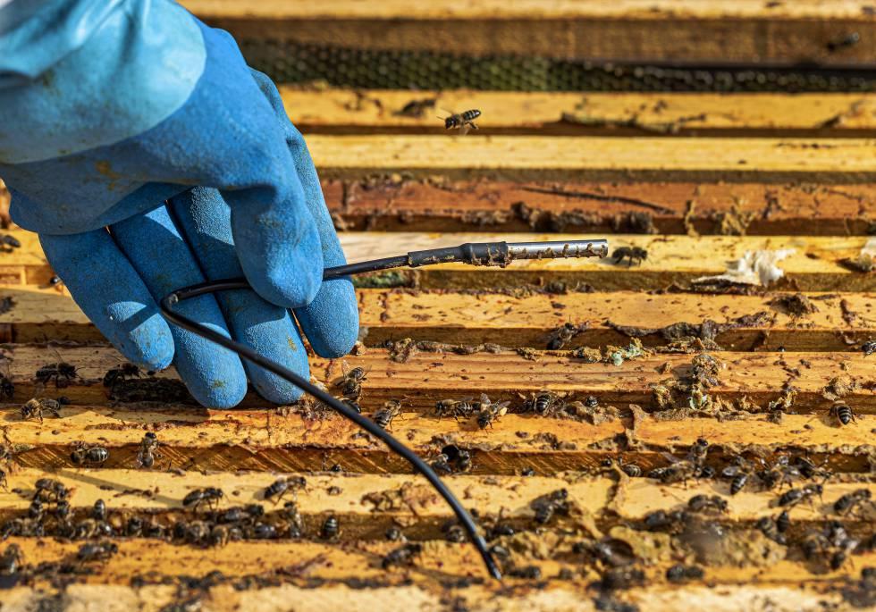 Colmenas inteligentes para combatir el colapso de las abejas